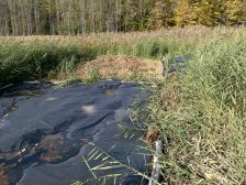Oct. 16, 2016. Phragmites litter pile after the northern tarp was moved to the east.